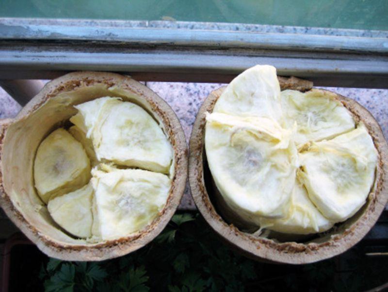 Superfruit-Cupuacu-2
